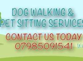 Gillian's Dog Walking & sitting services