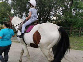 WANTED HORSE TO PART LOAN