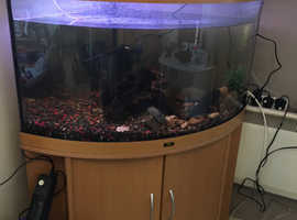 Free Juwel corner fish tank fish and all equipment