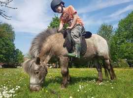 Miniature lead rein pony