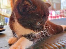 Kitten girl b and w