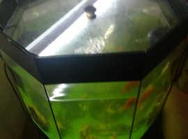 Fish tank an fish