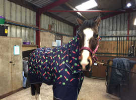 Warmblood x for part loan