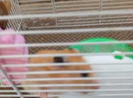 Harold the hamster is looking for a new home