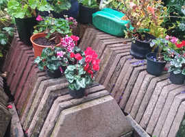 54 hexagonal patio paving slabs offered free to collect