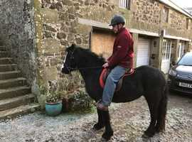 Darcy Attractive 4 year old filly