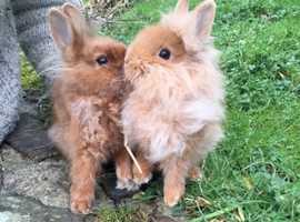 Gorgeous pair for tiny baby bunnies