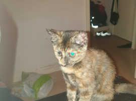X2 female kittens for sale