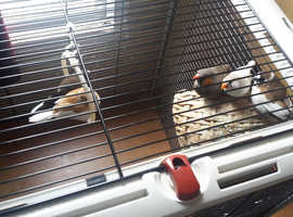 5 various finches and large cage