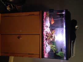 Fish tank with 2 fish