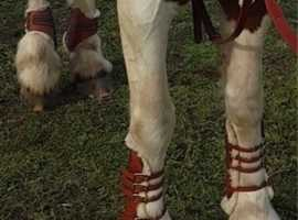 Tan tendon and fetlock boots