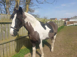 Fab loving mare