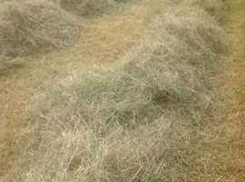 SMALL BALES OF MEADOW HAY