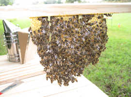 Bees in hives for sale, local to Wallingford