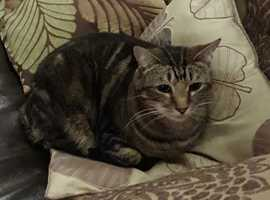 Missing Cat from Maldon Road, Burnham-on-crouch