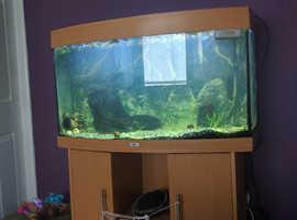 240 liter fish tank