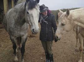 Horse Healer