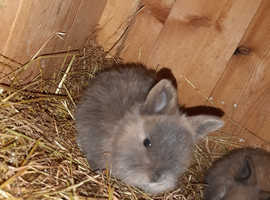 Last baby bunny looking for her forever home