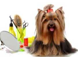 Pet spa and grooming treatments