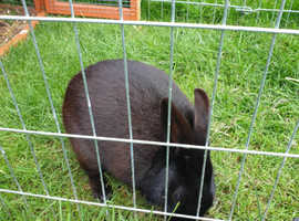 Jasper  the friendly rabbit