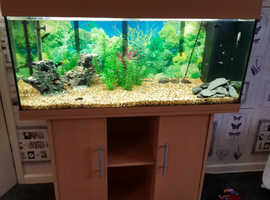Large jewel fishtank with stand
