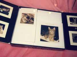 Kitten birthday cards 10.99 or an offer
