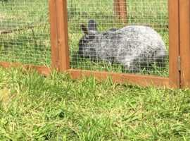 4  rabbits looking for homes