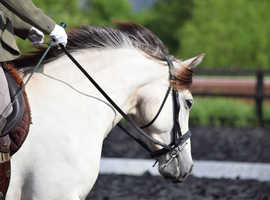 Eye-catching Silver Dun Mare