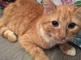 Purrfect female kitten