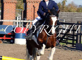 Pretty 13hh skewbald mare for sale.