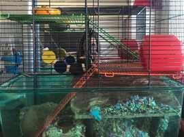 2 Super cute Gerbils in need of a loving home