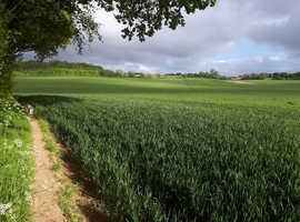Grazing Land and DIY in Chelsfield
