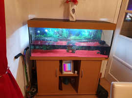 4 foot jewel fish tank complete set up with 2 terrapins