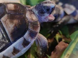 Tortoise Boarding
