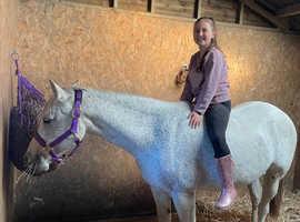 Excellent pony for sale in Pontypridd