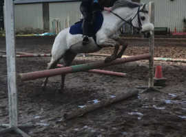 12.3 15 year old pony for sale