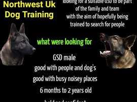 Wanted German Shepherd Dog