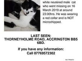 Missing Male cat felix