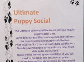 Puppy basic training and social event