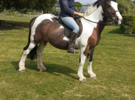 ABSOLUTELY BOMBPROOF FAMILY COB