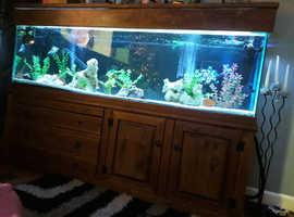 7 foot fish tank