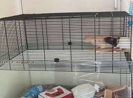 2 male rats for sale with cage