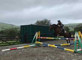 Lovely quality 15hh 10yr old mare