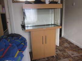 fish tank / vivarium