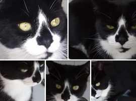 STOLEN CAT  PLEASE HELP