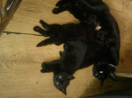 3 amazingly cute kittens for sale with loveable fun charachters.