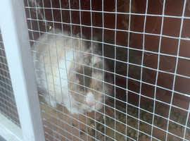 Bunny needs a friend