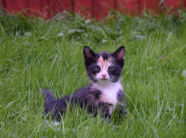 Lovely multicoloured female kitten