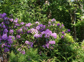 Lady gardener available to weed and tidy your garden - Rame Peninsula