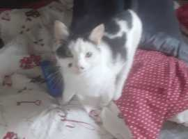 Female cat looking for a good home